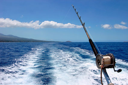 Salt Water Fish on Have Access To A Wide Variety Of Fish And They Need Only Visit The